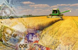 У запорожских фермеров могут отбирать урожай в случае непогашения кредита по аграрным распискам