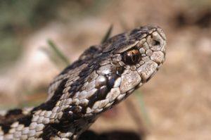 В Запорожье возле облбольницы обнаружили ядовитую змею - ФОТО