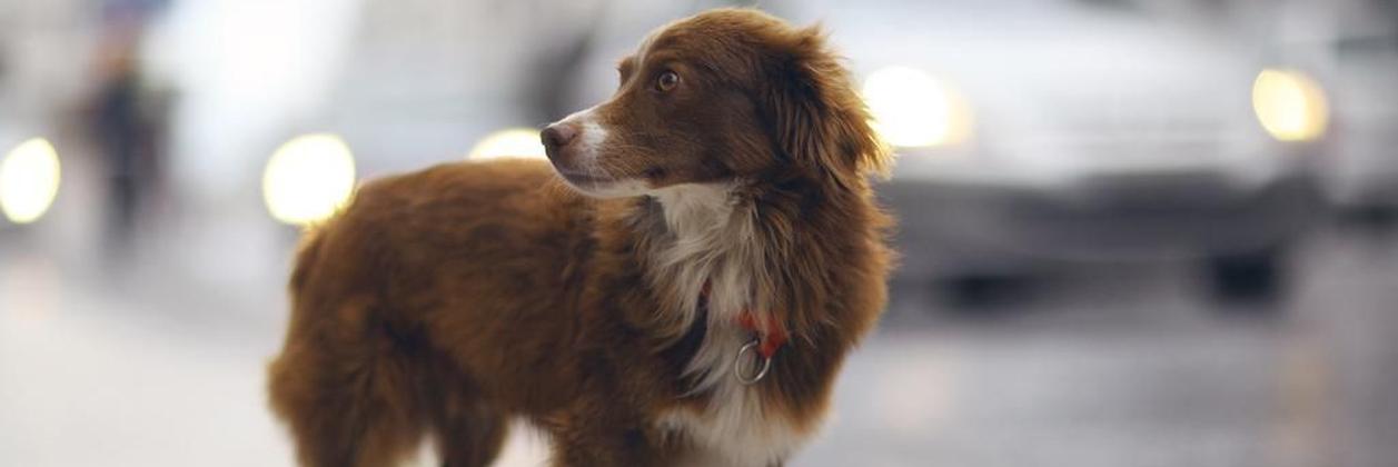 Петиция о создании Центра обращения с животными набрала необходимое количество подписей