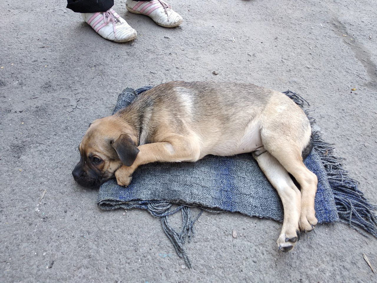 В Запорожье женщина выбросила щенка из окна четвертого этажа - ФОТО
