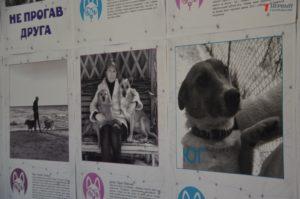 В Запорожье открылась фотовыставка, посвященная проблеме бездомных животных - ФОТО