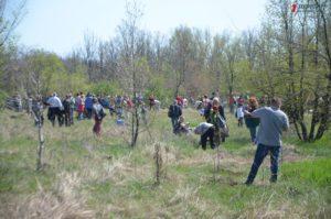 Тысячи запорожцев и гостей с других регионов Украины собрались на Хортице, чтобы высадить на острове массу новых деревьев -  ФОТО