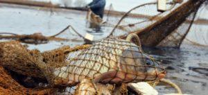 В Запорожье задержали двоих браконьеров, которые промышляли незаконной добычей рыбы в Днепре – ФОТО