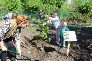 Коллекция запорожского ботанического сада пополнилась экзотическими сортами деревьев - ФОТО