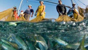 В районе Бердянской косы браконьеры незаконно вылавливали рыбу и креветок - ФОТО