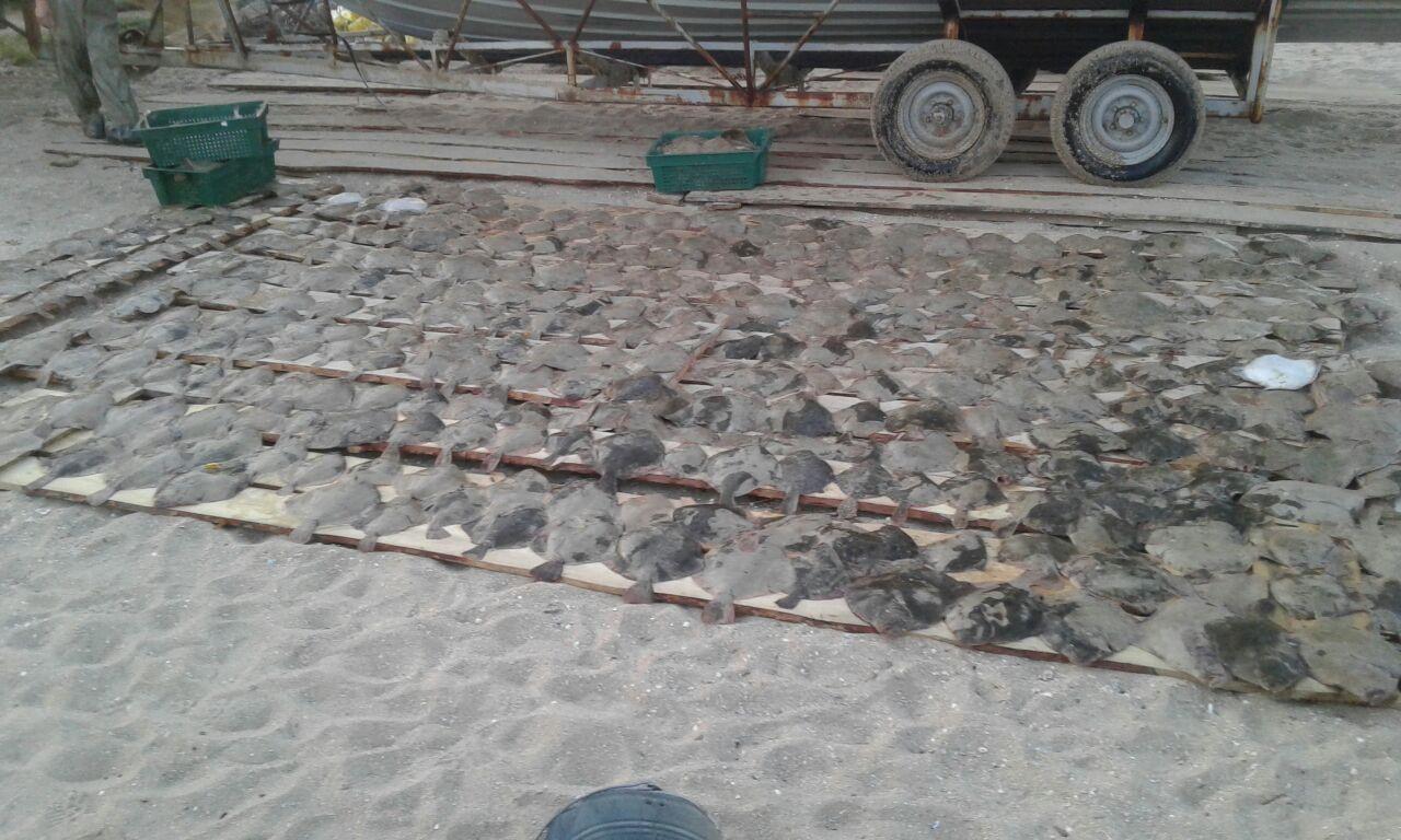 На берегу Азовского моря задержали браконьеров с уловом на 420 тысяч гривен - ФОТО
