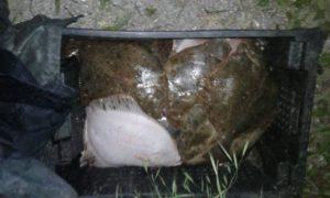 В Запорожской области задержали браконьеров с уловом на 80 тысяч гривен - ФОТО