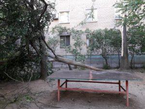 В Запорожской области из-за сильного ветра дерево рухнуло в метре от детской площадки - ФОТО
