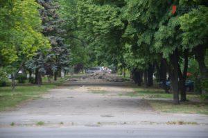 В центре Запорожья отправили под спил десятки елей в рамках реконструкции пешеходной зоны на Маяковского - ФОТО