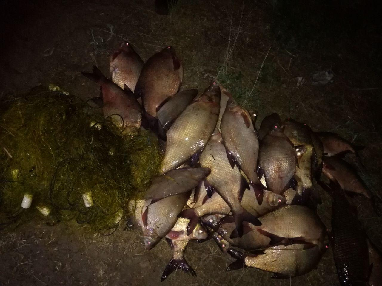 В апреле в Запорожской области выявили 107 фактов браконьерства - ФОТО