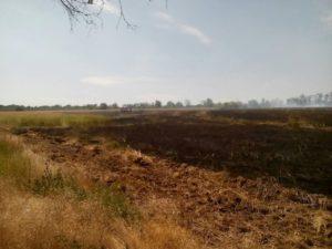 В Запорожье 17 спасателей тушили пожар на Хортице – ФОТО
