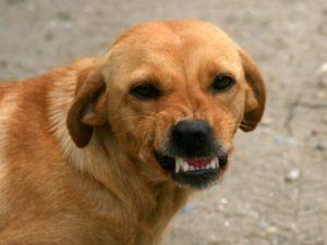 На запорожском курорте бродячие собаки напали на ребенка - ФОТО