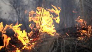 В Запорожской области тушили масштабный пожар - ФОТО, ВИДЕО