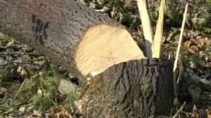 В Запорожье удалят 109 деревьев ради строительства автозаправки