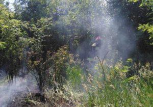 Запорожская область продолжает страдать от массовых пожаров - ФОТО