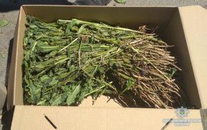У жителя Запорожской области нашли почти 300 кустов мака - ФОТО