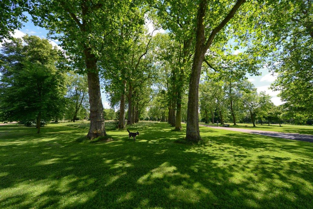 В Запорожье проведут еще одни общественные слушания по поводу сохранения зеленых насаждений