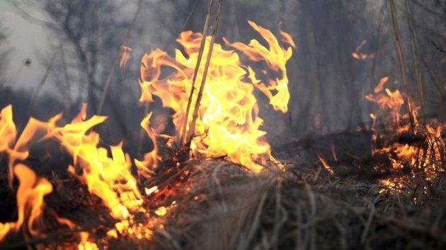 В Запорожской области огонь повредил 10 гектаров открытой местности