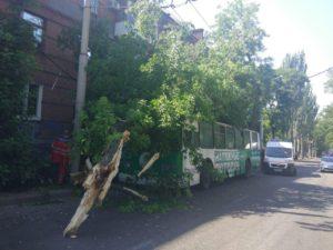 В Запорожье аварийное дерево свалилось на троллейбус с пассажирами: есть пострадавшие - ФОТО