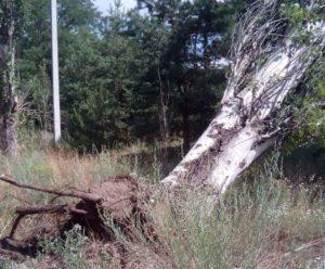 На Хортице ветер с корнем вырвал дерево: повреждены линии электропередач - ФОТО