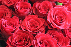 Миллион алых роз: в Запорожье поймали