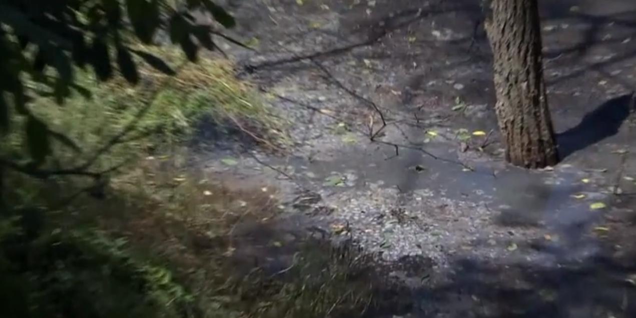В Запорожской области опасные канализационные стоки разлились в лесной зоне и губят все живое - ВИДЕО