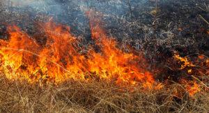 В Запорожской области спасатели затушили 10 пожаров в экосистемах