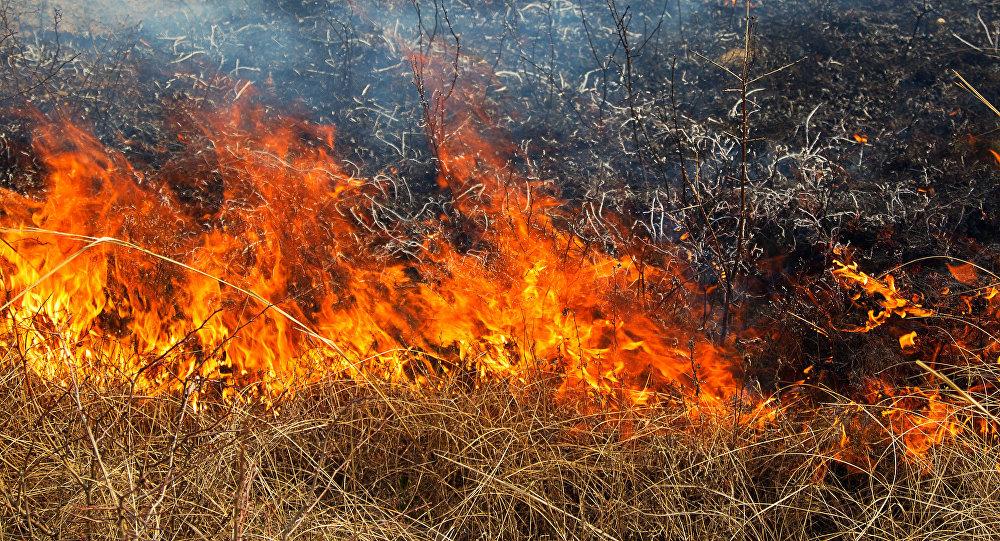 В Запорожской области почти сотня спасателей тушила пожары в экосистемах