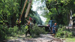 В Заводском районе Запорожья избавляются от аварийных деревьев - ФОТО