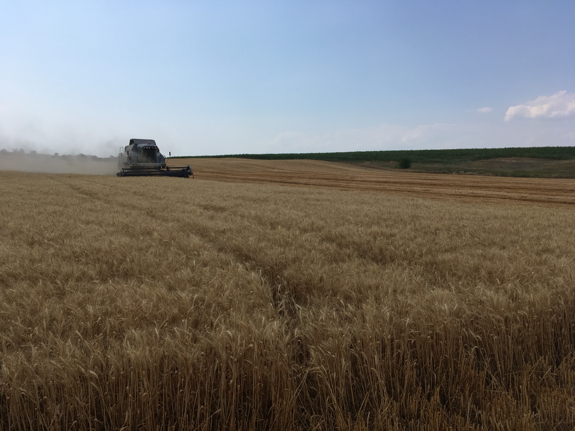 В Запорожской области обнаружили поле, самовольно засеянное пшеницей - ФОТО