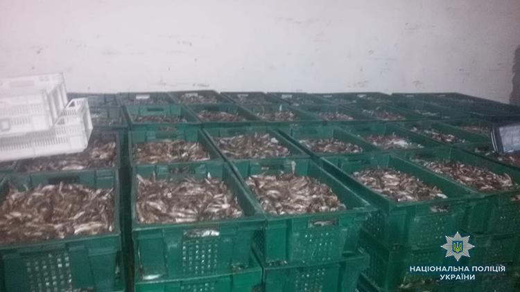 Обыски на предприятиях в Бердянске: правоохранители изъяли около 500 тонн рыбы - ФОТО