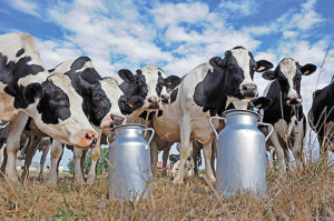 В Запорожской области открыли двенадцатую молочную ферму семейного типа