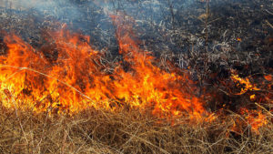 У Запорізькій області за останню добу рятувальники ліквідували шість пожеж на відкритій місцевості