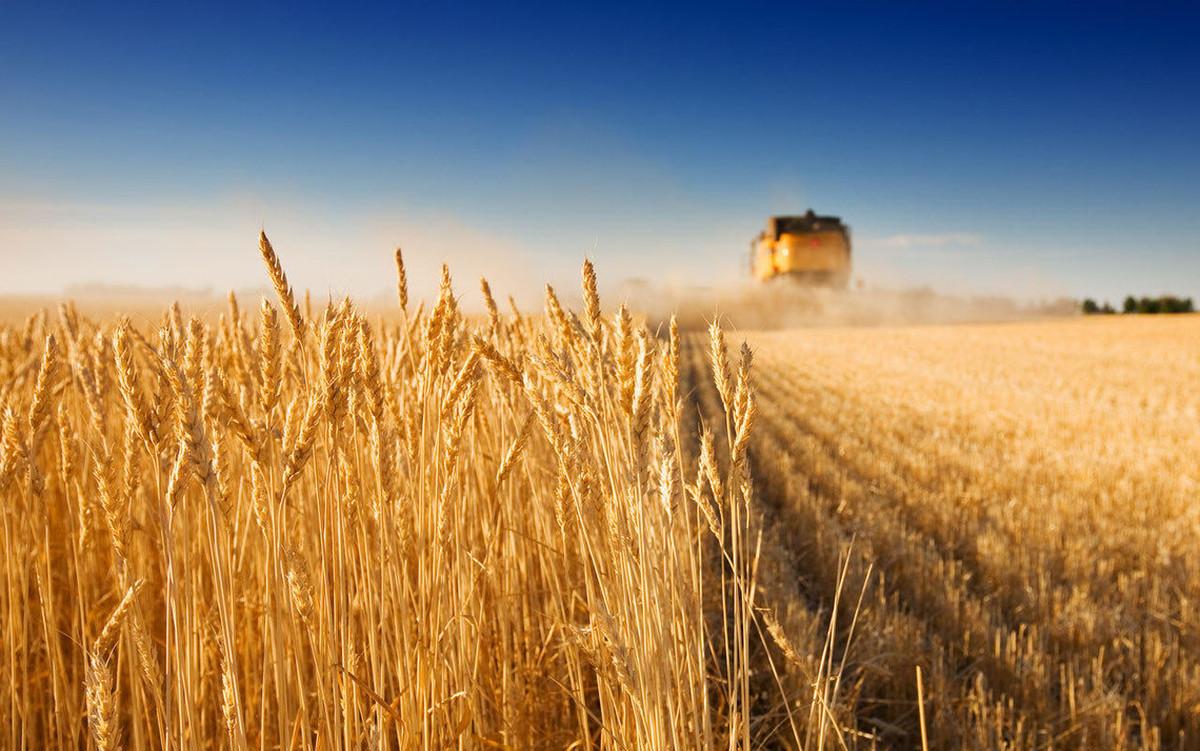 Несмотря на засуху и неблагоприятные прогнозы, в Запорожской области собрали первый миллион тонн зерна урожая