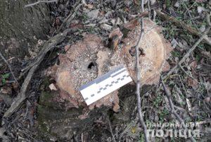 В Запорожской области 22-летний парень вырубил деревьев на 200 тысяч гривен - ФОТО