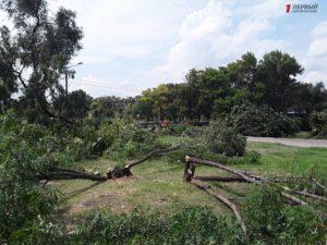 Полиция проводит проверку по факту вырубки деревьев в парке Яланского