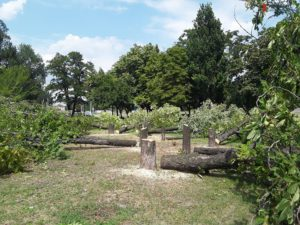 В Запорожье в парке Яланского спиливают деревья для подготовки к строительству ТРЦ Кальцевым - ФОТО