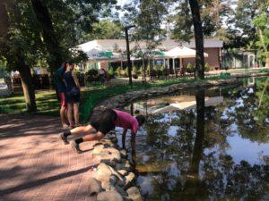 В Запорожской области мужчина удивил прохожих, когда принялся вылавливать из пруда монеты - ФОТО, ВИДЕО