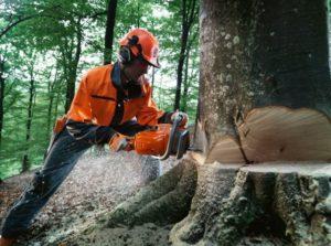 В Запорожском парке вдоль Набережной магистрали коммунальщики удалят 90 деревьев