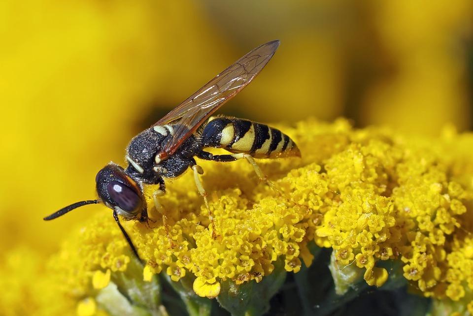 Запорожские медики предупреждают о повышенной агрессивности пчел и ос