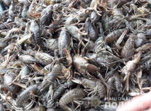 В Запорожье поймали двух браконьеров, ловивших раков во время запрета - ФОТО