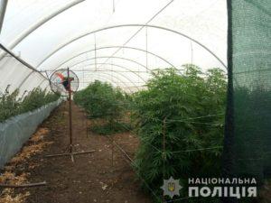 Запорожские правоохранители выявили очередные наркоплантации - ФОТО