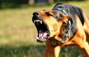 В Запорожской области бездомная собака напала на женщину - ФОТО