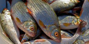 В Запорожье будут судить группу браконьеров, ловивших рыбу на Каховском водохранилище