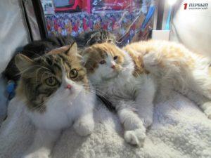 Сфинксы, мейн-куны и бенгалы: в Запорожье прошла международная выставка кошек - ФОТО