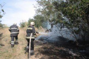 В Запорожском районе произошел масштабный пожар: горели заброшенные сады - ФОТО