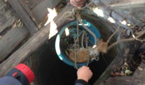 В Запорожской области спасатели вытащили щенка, упавшего в колодец - ФОТО