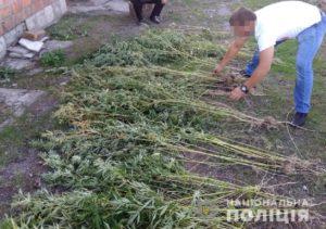Житель Запорожской области высадил наркоплантацию с 350 кустами конопли - ФОТО