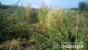 Житель Запорожской области выращивал во дворе дома коноплю – ФОТО
