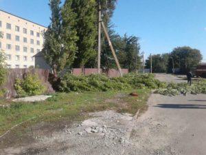 В Запорожской области из-за упавшей ветки погибла женщина - ФОТО